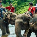Elephant Camps and Trekking